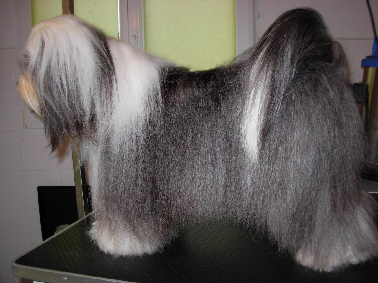 wanted nice dog's WADODARA